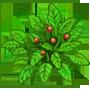 毒碧草の画像