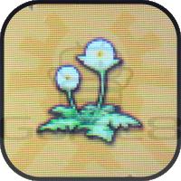 アバキ草の画像