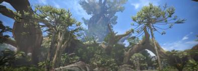 古代樹の森の画像