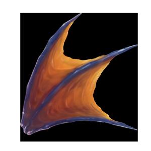 海龍のヒレの画像