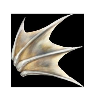 覇竜のヒレの画像