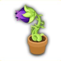 謎の盆栽の画像