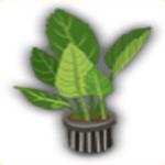 緑の盆栽の画像