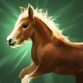小馬の画像