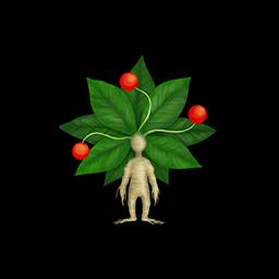 マンドラゴラ(素材)の画像