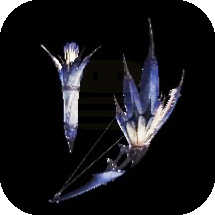 Legia Snowfletcher Bow Image