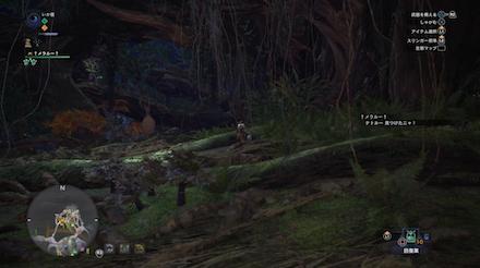 古代樹の森のテトルーの画像