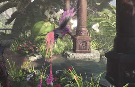 タキシードサンゴドリの画像