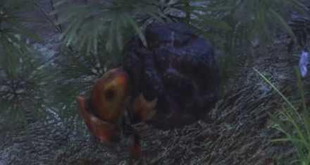 バクダンイワコロガシの画像