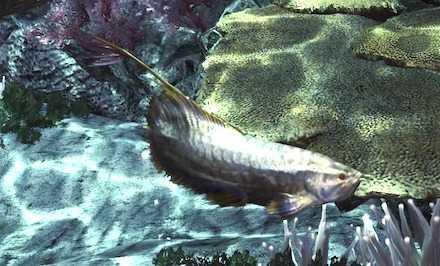 白金魚の画像
