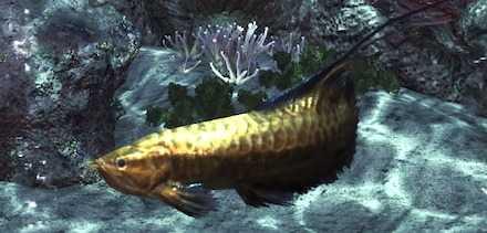 黄金魚の画像
