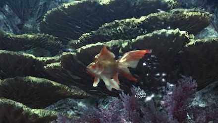 小金魚の画像