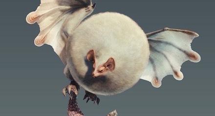 MHWのパオウルムー