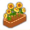 ひまわりの盆栽の画像