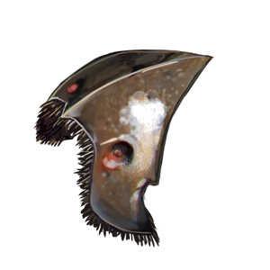 甲虫腹板の画像