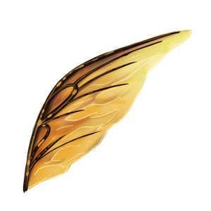 甲虫後翅の画像