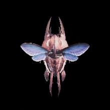 猟虫の画像