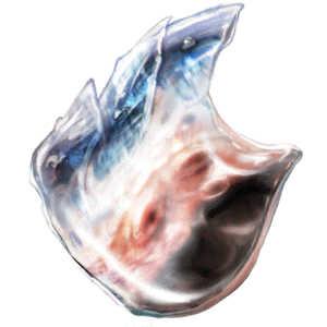 海王の表皮の画像