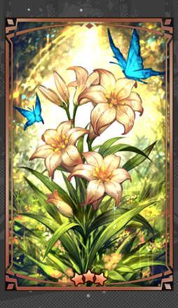 バラドンナの花の画像