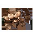 そら豆の画像