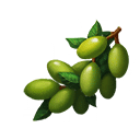 オリーブの画像