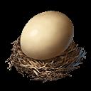 ダチョウの卵の画像