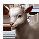 ヤギの画像