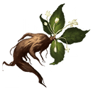 マンドレイクの画像