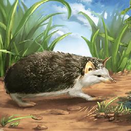 ヨーロッパハリネズミ(カワイイハリネズミ)の画像