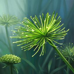 パピルス(描ける植物)の画像
