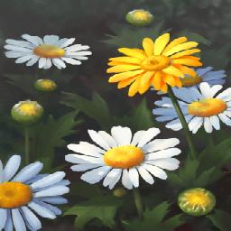 雛菊(詩人の雛菊)の画像