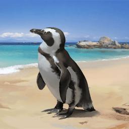 ケープペンギン(羽がある魚)の画像