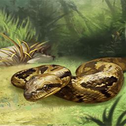 マダガスカルツリーボア(ジャングルの大蛇)の画像