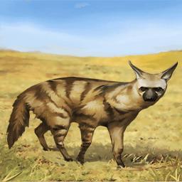 コヨーテ(臆病なオオカミ)の画像