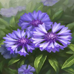 ヤグルマギク(目を明かす花)