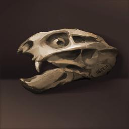 ディイクトドンの化石(おかしいネズミ)の画像