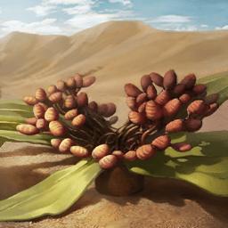 ウェルウィッチア(砂漠の蘭)の画像