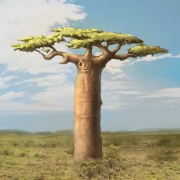 アフリカバオバブ(パンの実)の画像