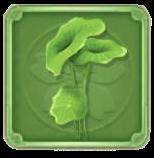 蓮の葉の画像