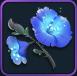 恵風の花の画像