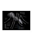巨大アリの画像