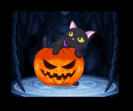 くろねこかぼちゃの画像