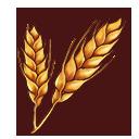 小麦の画像