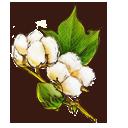綿花の画像