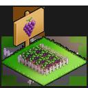 ★1小さめのぶどう畑の画像