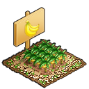 ★6高貴なバナナ畑の画像