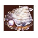 真珠貝の画像