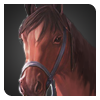 アラブ馬画像