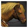 デンマーク戦馬画像