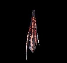 深淵の龍骸布・赤の画像